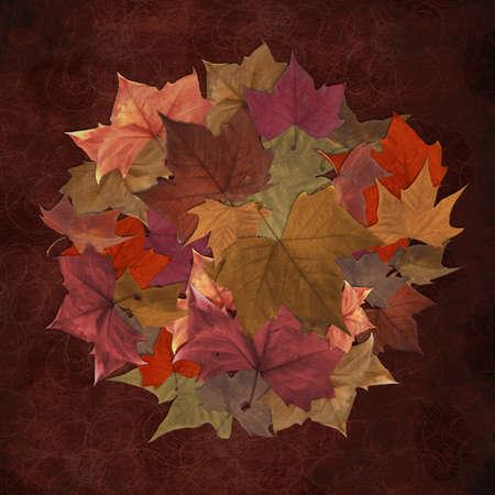 Autumn leaves circle pattern vintage background Stock Photo - 10528635