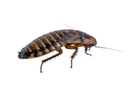 Bug Close up isolated over white photo