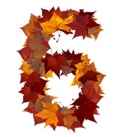 Number 6 made with autumn leaves isolated on white with clipping path. So you can easily cut it out and place over the top of a design. Find others symbols in our portfolio to compose your own words. photo