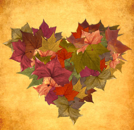 canada leaf: Multicolored fall leaf lot in heart shape over vintage background