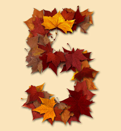 Number 5 drop shadow made with autumn leaves Isolated with clipping path, so you can easily cut it out and place over the top of a design. Find others types in our portfolio to compose your own words. photo