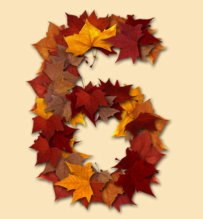 Number 6 drop shadow made with autumn leaves Isolated with clipping path, so you can easily cut it out and place over the top of a design. Find others types in our portfolio to compose your own words. Stock Photo - 10637038