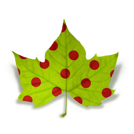 Decorative fall leaf with red dot texture isolated over white background with clipping path, so you can easily cut it out and place over the top of a design. photo