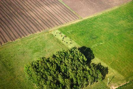 plan éloigné: Vue aérienne sur les champs verts de printemps début de l'Uruguay. Banque d'images