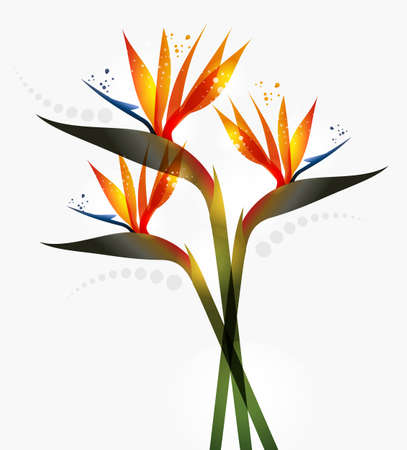 tropical forest: Bird of Paradise flower isolated over white background. EPS10 file version. This illustration contains transparencies and is layered for easy manipulation and custom coloring