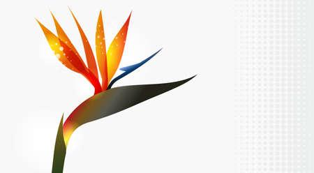 Bird of Paradise bloem close-up geà ¯ soleerd op een witte achtergrond. EPS10 bestandsversie. Deze illustratie bevat transparanten en is gelaagd voor gemakkelijke manipulatie en aangepaste kleur-