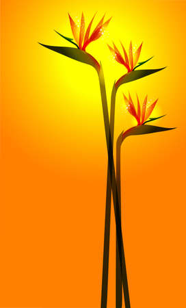 ave del paraiso: Ave del paraíso de flores sobre fondo naranja soleado. Esta ilustración contiene transparencias y capas para una fácil manipulación y colorante de encargo Vectores