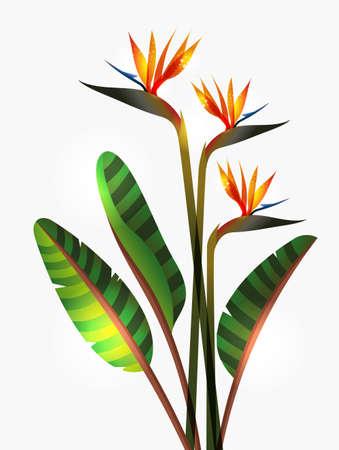 ave del paraiso: Ave del paraíso flor aislada sobre fondo blanco. Esta ilustración contiene transparencias y capas para una fácil manipulación y colorante de encargo Vectores
