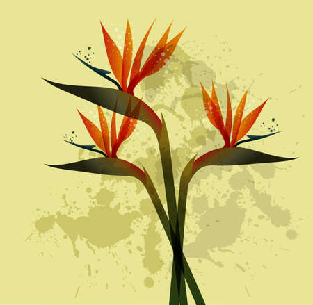 bird of paradise plant: Spring time contemporary grunge bird of the paradise flowers. file version. This illustration contains transparencies and is layered for easy manipulation and custom coloring