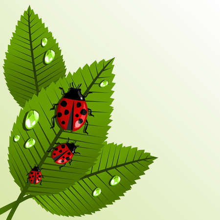 Spring ladybug and leaves with water drop background. Vector file layered for easy manipulation and custom coloring. Vector