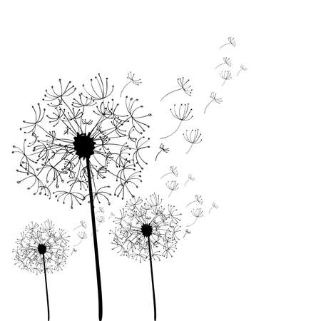 plant delicate: Hand drawn dandelion isolated over white background. file layered for easy manipulation and custom coloring. Illustration
