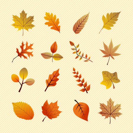 Fall season variety of tree leaves nature elements set    Vector