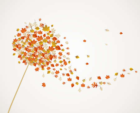 dandelion abstract: Abstract autumn concept. Dandelion with flying leaves and flower petals background