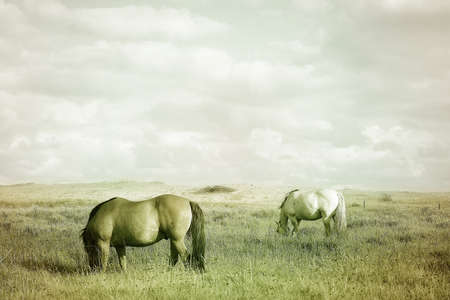 light brown horse: Countryside landscape with grazing horses on pasture under cloudy sky. Soft warm colors vintage effect photography. Stock Photo