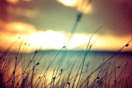 Wilde grassen bij gouden zomer zonsondergang vintage landschap. Stockfoto