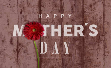celebration day: Happy Mother day vintage retro wood background with macro close up red flower ideal for greeting card and poster design.
