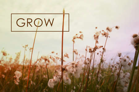 Grow motivational inspiring quote concept with wildflower landscape background. Vintage soft light hipster style.