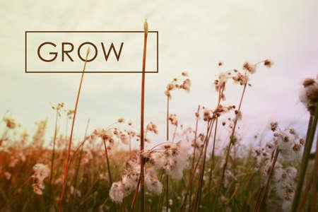 Grow motiverende inspirerende citaat concept met wilde bloemen landschap achtergrond. Vintage zacht licht hipster stijl.