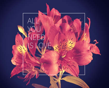 nice day: All you need is love inspiring motivation quote with vintage soft light natural flower bouquet background ideal for valentines day and wedding card.