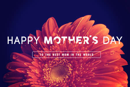 happy mom: Happy Mother day quote concept vintage retro flower close up background ideal for greeting card and poster design.
