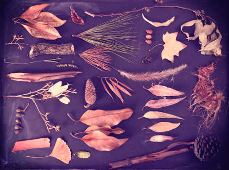 ginkgo leaf: Fall season composition autumn nature elements on blackboard background. Includes ginkgo leaf, pine cone, bark and branches. Stock Photo