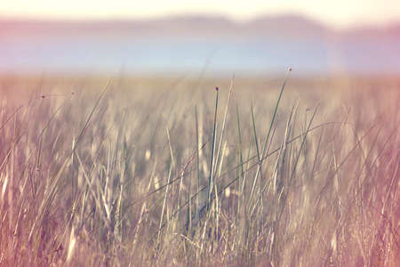 blur effect: Peaceful view of grass meadow with water and clear sky in the background, blur effect and vintage hipster filter.