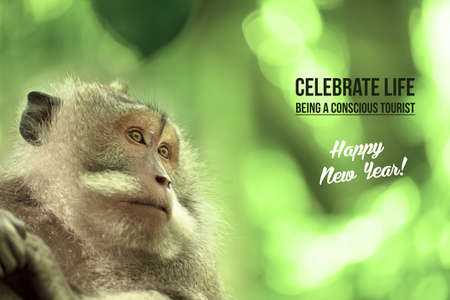 wildlife conservation: Wild monkey portrait in natural habitat, happy new year design with wildlife conservation tourism text. Ideal for campaign poster or card. Stock Photo
