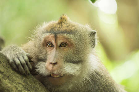 wildlife conservation: Funny curious wild monkey face portrait looking over tree branch in natural habitat. Wildlife conservation campaign.