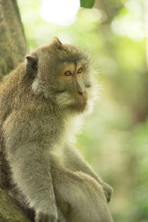 wildlife conservation: Wild monkey sitting on tree branch looking sad with nature jungle background. Wildlife conservation campaign. Stock Photo
