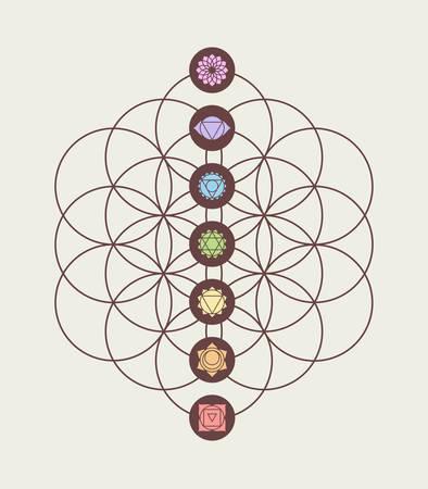 armonia: Chakras principales en la flor de la vida Fondo de geometría sagrada, la armonía y el equilibrio de un diseño moderno.