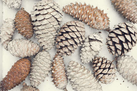 Vintage winter time composition, top view of pine cones on white wood texture.