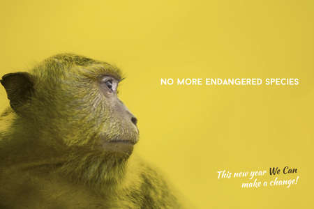 endangered species: Wildlife conservation colorful yellow design with wild monkey face portrait photography and endangered species awareness text, new year change. Stock Photo