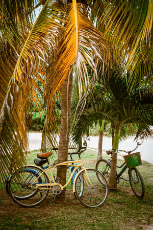 sustainable tourism: Tourist bicycles parked in palm tree on summer time. Think green transport concept, eco friendly tourism, healthy sustainable lifestyle. Stock Photo