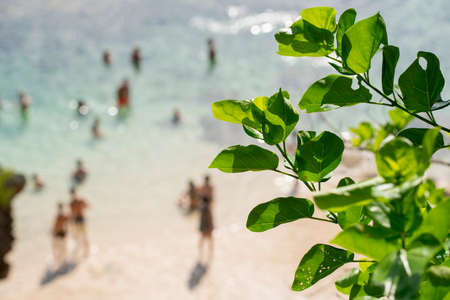 foreground focus: Defocused blur background of beach coast with people enjoying summer vacations and green leaves in focus in the foreground.