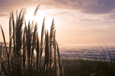 sea grass: Vintage beach landscape on summertime, wild grass plant and sea shore background. Stock Photo
