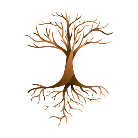 Empty tree with branches and roots on isolated background. Nature template concept.