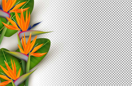 Transparent bird of paradise flower background. Tropical summer season floral design in 3d style with copy space. Illustration