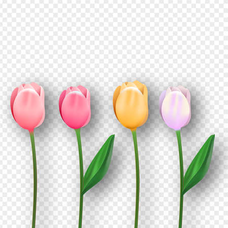 Beautiful pink tulip flowers on isolated transparent background. Realistic 3d spring flower set.