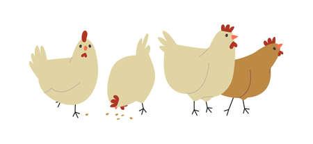Groupe de poules de ferme sur fond blanc isolé. Oiseaux de poulet femelles mignons mangeant, concept d'animaux en liberté ou bétail sain. Vecteurs