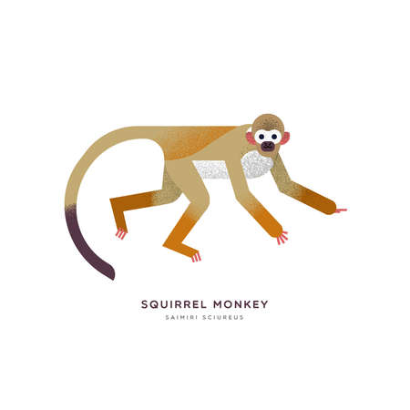 Squirrel monkey animal illustration on isolated white background. Educational wildlife design with fauna species name label.