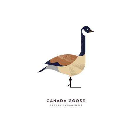 Illustrazione animale dell'oca del Canada su fondo bianco isolato. Design educativo della fauna selvatica con etichetta con il nome delle specie faunistiche.