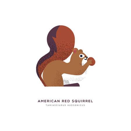 Ilustración animal de la ardilla roja americana sobre fondo blanco aislado. Diseño educativo de vida silvestre con etiqueta de nombre de especie de fauna.