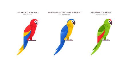 Bunte Ara Papageienvogel Tierillustration auf lokalisiertem weißem Hintergrund. Pädagogisches Wildtierset mit Namensschild für Tierarten. Vektorgrafik