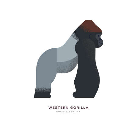 Western gorilla illustration on isolated white background, african safari animal concept. Educational wildlife design with fauna species name label. Vettoriali