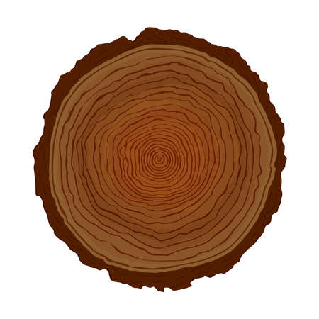 Wood tree circle cut with natural ring shapes on isolated white background. Hand drawn wooden trunk illustration for science study of plant age growth or eco friendly concept.