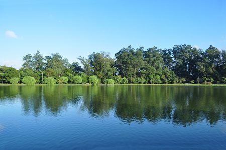 forest met reflectie op het water