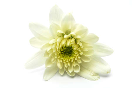 An isolated white flower on white background photo