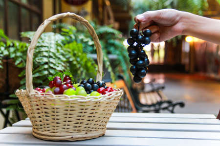 Hand holding purple grape with basket of grape photo