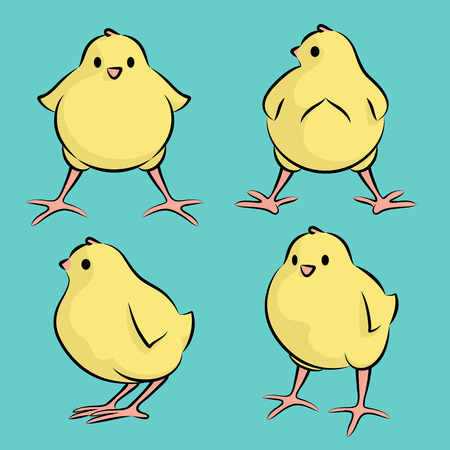 Vector Illustration Of A Baby Chicken From Four Angles Illustration