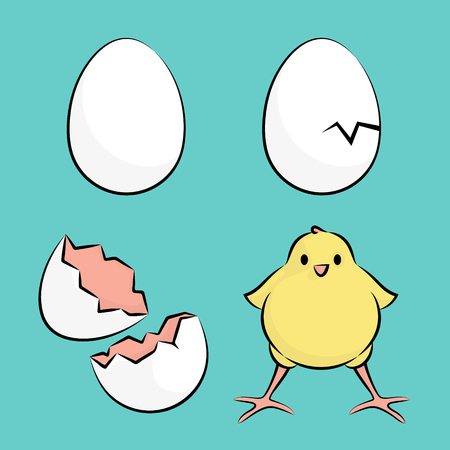 brooder: Vector Illustration Of A Egg to Chicken Hatching Process Illustration